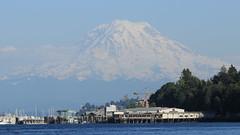 Mount Rainier (Zach Hawn) Tags: washington owen pointdefiance mpt metroparkstacoma pacificnorthwest pnw marine marinebiology wildlife animal pugetsound salishsea