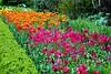 A sea of colour (Gemma Hampton) Tags: flowers hedge uk blickling blooms petals pink orange