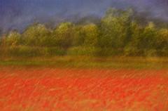 untitled70 (Valeria Rossi Brichese) Tags: landscape impressionism colors canon veneto painterly
