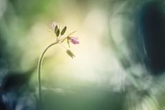 Blue spring (Giacomo della Sera) Tags: flower flor blue spring nature naturaleza enjoy disfrutar green verde amarillo yellow macro textures textura