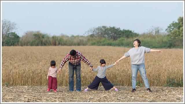 3月台南 親子寫真可以這樣拍 木棉花 蜀葵 小麥 一次讓你拍個夠 (64)