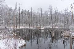 quabbinreservoir2018-53 (gtxjimmy) Tags: nikond7200 nikon d7200 quabbinreservoir belchertown ware massachusetts newengland spring snow lakewallace storm