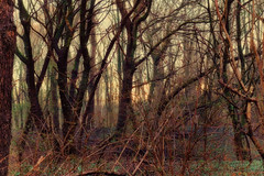 Forest dreams (STEHOUWER AND RECIO) Tags: forest bos trees bomen nature dream dreamy dreams netherlands holland dutch vrijenburgerbos processing magic light photo photography capture image