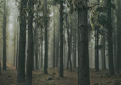 DSC_0273 k2pkñ (García Franco AQua-CliCk) Tags: pimordial homeland damnedland landscape wood pines