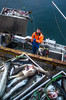 The fisherman (Larsenio) Tags: fish fun fishing fisk fiskevær andøy andenes andøya arctic pentax