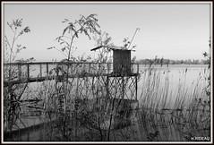 Esquisse (Les photos de LN) Tags: carrelet nature monochrome printemps esquisse dessin paysage roseaux fleuve garonne aquitaine