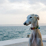 Dog at beach thumbnail