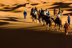 Caravan (cezary.morga) Tags: sahara morocco desert dunes people camel camels sunset