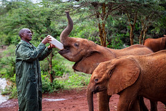 Tough love (rgreen_se) Tags: africa congusto fun enjoying nature outdoor bekindtoelephants depthoffield elephant wildlife tree friendly forest reaction green tourism wood warm