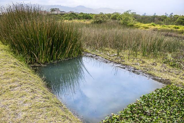 Espejo de agua en el Nodo Tibanica