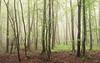 Still waiting for the first Leaves (Netsrak) Tags: baum bäume eu europa europe forst landschaft natur nebel wald fog forest landscape mist nature tree trees woods eifel rheinbach nordrheinwestfalen deutschland de