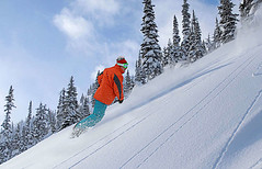 ski foret (dominique.vannucci) Tags: ski snow neige freeride montagne skieur horspsite poudreuse sapin foret powder glisse casque megeve france