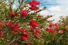 _DSC0443.jpg (David Mazánek) Tags: hendaye květy francie země místa města rostliny