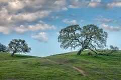Hillside (Kirk Lougheed) Tags: california pachecostatepark usa unitedstates cloud field grass hill landscape meadow oak outdoor pacheco park pasture plant sky spring statepark tree valleyoak