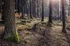 Deep Forest (*Photofreaks*) Tags: forest floor soil wald waldboden trees sauerland germany deutschland nature natur landscape landschaft spring woods bruchhausersteine rothaargebirge bäume frühling istenberg adengs wwwphotofreakseu
