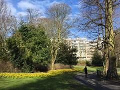 Stadspark - Antwerpen (eyair) Tags: ashmashashmash belgium flanders antwerp antwerpen stadspark citypark daffodil flower