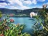 Lago di Nemi (martinasabbatini) Tags: summer estate agosto sole oleandro nature natura italy italia castelli genzano nemi lago lagodinemi