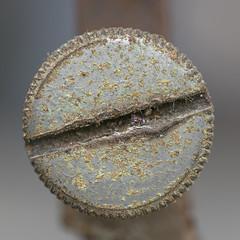 Old Screw (Pioppo67) Tags: canon 80d vite screw sigma 105 macromondays circles