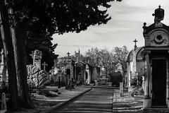 Cemetery (x1klima) Tags: marseille provencealpescôtedazur frankreich fr sonya7r3 a7riii ilce7rm3 sony sonyfe85mmf14gm sel85f14gm tod sterben death emptiness einsamkeit pain schmerz leid qual qualen mühe aching ache grief trauer kummer gram hurt chastity distress not bedrängnis verzweiflung leiden soreness mourning trauern trauerzeit sorrow sorge betrübnis traurigkeit misery misere affliction harm agony misfortune sadness burialplace cemetery grabstätte friedhof grave grab