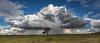 Lone Tree.jpg (Attapp) Tags: lonetree madagascar isolo african plain