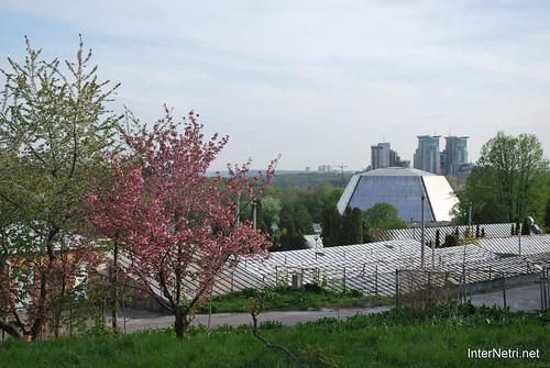 Ботанічний сад імені Гришка Цвітуть магнолії InterNetri  Ukraine 188