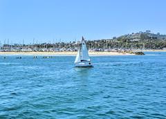 Sailing out of the Marina (joe Lach) Tags: california santabarbara sailboat sailing marina harbor pacificocean joelach