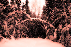 This is the spot (evakongshavn) Tags: winter winterwonderland winterwald winterlandscape landscape landschaft paysage wald forest foret snow light white pink trees 7dwf