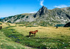 tranquil (Gully Wabbit) Tags: rila national park nature lakes bulgaria peaceful gullywabbit wild horse