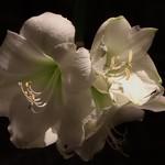 Temps de Flors 9 Girona, Catalunya thumbnail