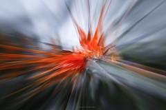 """""""Strelitzia """" (Günter Nietert) Tags: paradiesvogelblume mehrfachbelichtung doppelbelichtung stapelverarbeitung botanischergartenbayreuth frühling frühblüher mai blumen blüten canon 5dmkiv strelitzia"""