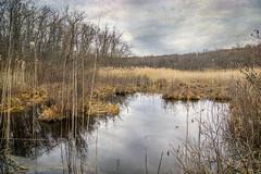 Cranberry Lake (JMS2) Tags: nature lake fen marsh bare scenic landscape kerstinfranktexture