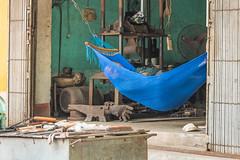 Workshop - Closed for Nap (ronniegoyette) Tags: ninhbinh northvietnam nap hammock workshop