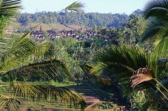 View across the valley, Bali (scinta1) Tags: bali balinese tabanan riceterraces sawah view hillside palms green valley rooftops village temple meru
