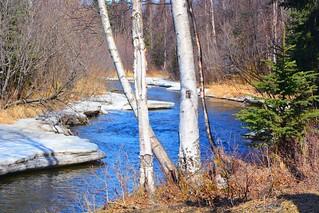 Alaska Anchorage Campbell Creek Greenbelt Park