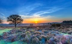 Forest Sunrise (nicklucas2) Tags: landscape newforest mogshade tree cloud sunrise sun flare heather