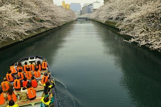 Boat Ride Under Cherry Blossoms
