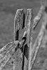 Fence Post (Dalliance with Light (Andy Farmer)) Tags: bw bokeh fence wood weathered texture splitrail