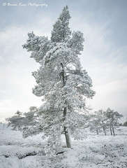 Winter At Nenthead (.Brian Kerr Photography.) Tags: cumbria nenthead photography photo landscapephotography landscape tree snow winter weather outdoor outdoorphotography opoty nature naturallandscape natural beautifulmorning cold coldmorning briankerrphotography briankerrphoto sony a7rii formatthitech firecrest vanguarduk altasky45d sky people forest