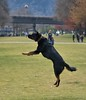 Leap Of The Day (Scott 97006) Tags: dog leap fail animal canine pet cute jump ball