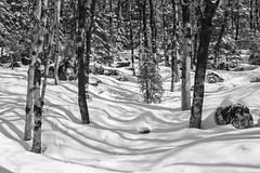 Shades (Enricu) Tags: shadows nature nationalpark bw tokina 80d canon pyrenees forest snow ngc