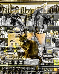 """Doing nothing is better than being busy doing nothing."" ―Lao Tzu 🐈 (anokarina) Tags: colorsplash psmobile adobephotoshopexpress appleiphone8 🐈 kaloramatriangle dupontcircle cat kitten kitty pet feathers yellow golden gold bitethefruit"