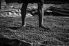 Coffee drying, Laos (pas le matin) Tags: coffee café feet pieds man homme nb bw noiretblanc blackandwhite beans travel laos lao asia asie southeastasia canon 7d canon7d canoneos7d eos7d