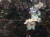 RightShift_0003 (troutcolor) Tags: imagemagick random victoriapark bash spring experiment