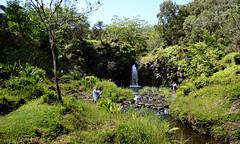 On the way from Kaumahina State Park to Hana Bay through Hana Hwy : 'Valley Isle Excursions'– the incredible Maui tour to Hana…and Haleakalā. (biswarupsarkar72) Tags: hawaii pacificocean pacificislands pacificseabeaches maui usa tourisminusa travellinginusa sea seabeaches wailea grandwailea nikon nikond7000 samsung samsungmobilephotography samsungmobileon7pictures nikonphotography islandsinpacificocean passionoftravellinginusa photojournalism biswarupsarkar biswarupsphotography biswarupsphotographicjourney islandsofhawaii toursinhawaii tourisminhawaii charmsofhawaii natureofhawaii travellinginhawaii experienceinhawaii pacific pacificbeauty enchantinghawaii valleyisleexcursion haleakalanationalpark hana
