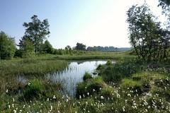 Vennetje te Assel op de Veluwe; mosgras op de voorgrond. (Leo van Zanten - Fotoalbum (Photoalbum)) Tags: assel veluwe houtvesterijtloo ven wolgras breathtakinglandscapes