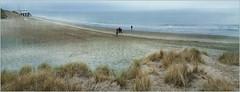 Dunes, plage et la mer du Nord, De Banjaard, Kamperland, Noord-Beveland, Zeelande, Nederland (claude lina) Tags: claudelina nederland hollande paysbas zeelande zeeland beach merdunord debanjaard