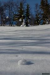 Massive Avalanche (kentkirjonen) Tags: canon 80d sweden sverige dalarna ue explore utforska cold winter vinter snow snö kallt wood trä struktur structure nature natur tree trees träd avalanche snöskred trail spår snöspår