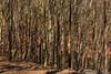 Jasmund (ako_law) Tags: 2470mm 5dmarkiv 5d4 5div canon canonef2470mmf4lisusm canoneos5dmarkiv ef2470mmf4lisusm inselrügen jasmund jasmundnationalpark naturereserve objektiv rügen unescoworldheritagesite sassnitz mecklenburgvorpommern deutschland de