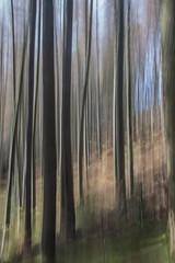 Conic Hill (stu1406) Tags: lochlomond conichill trees forest icm blur april 2018 scotland