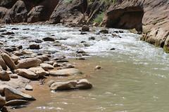 IMG_3704 (Egypt Aimeé) Tags: narrows zion national park canyons pueblos utah arizona